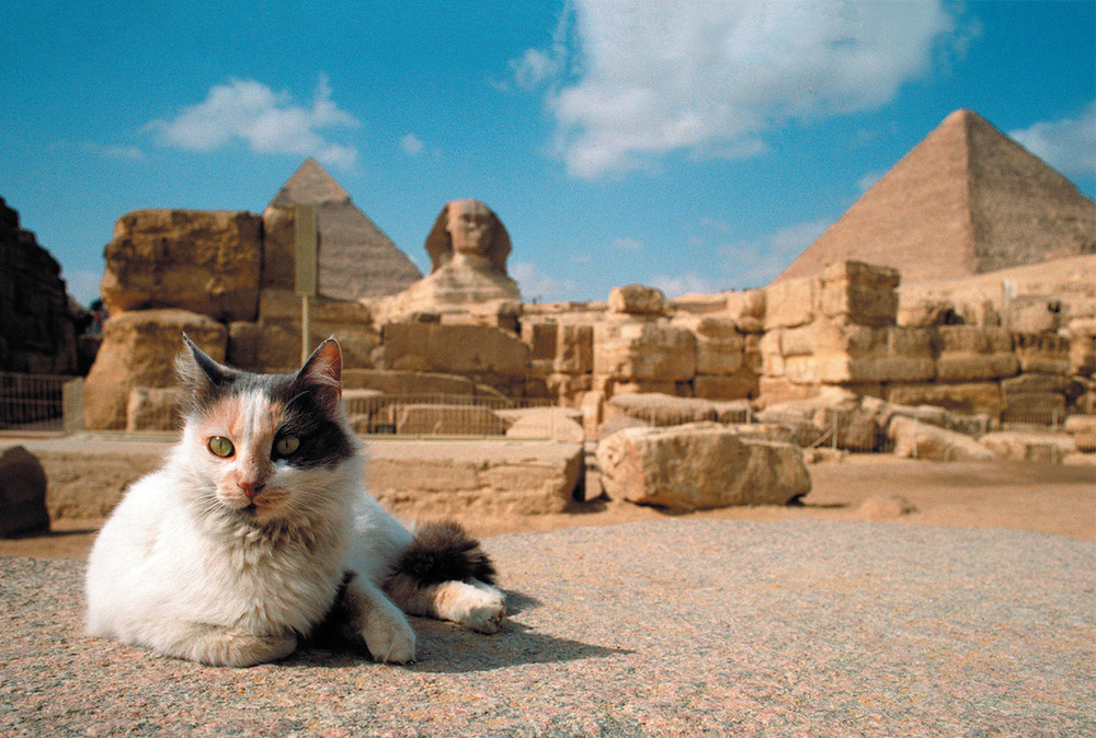 Catster Magazine - March/April 2018 - CATS in the Ancient World