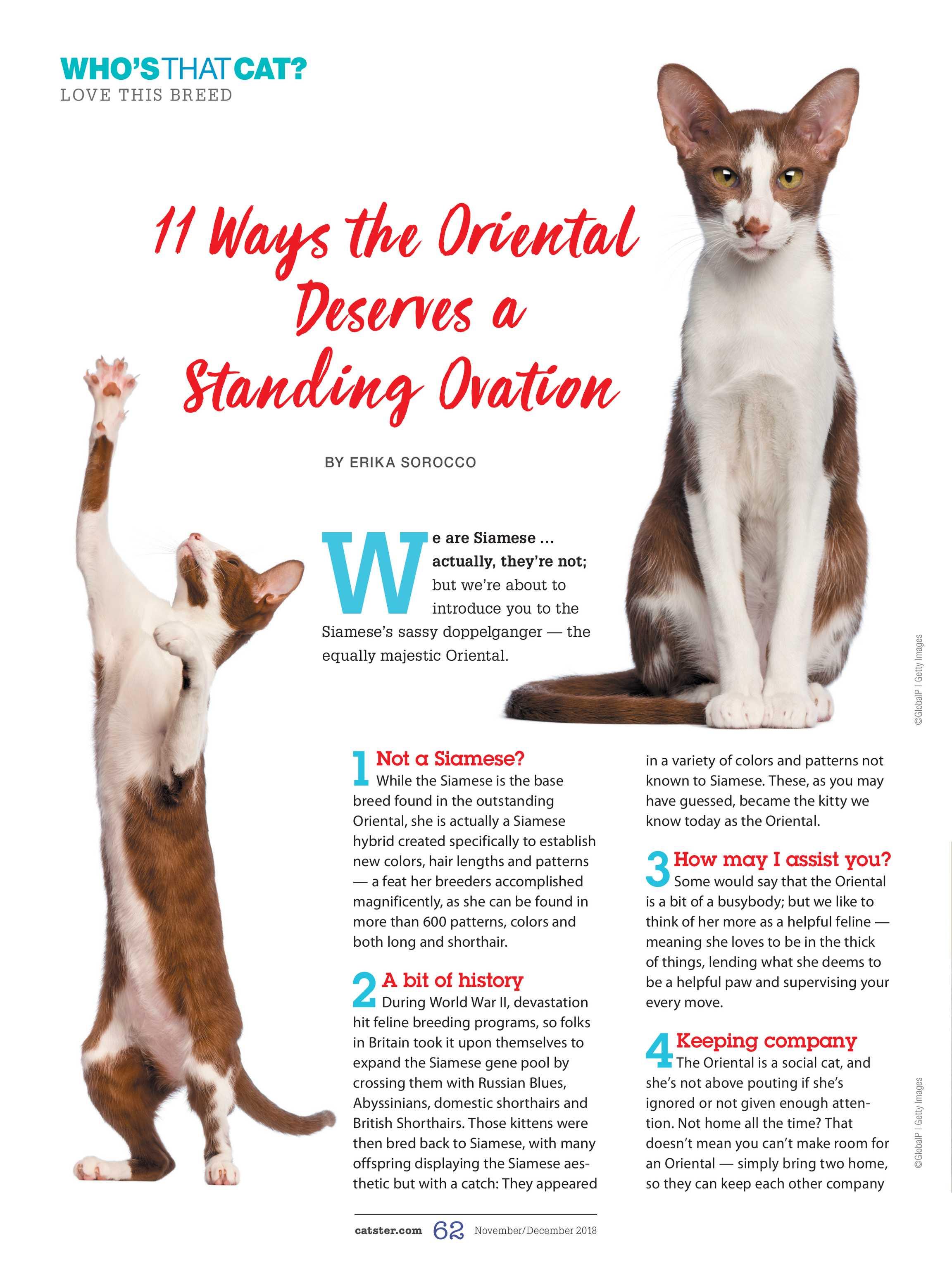 0f1cd57ea1 Catster Magazine - November December 2018 - page 62