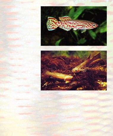 Tropical Fish Hobbyist - May 2009 - Page 86-87