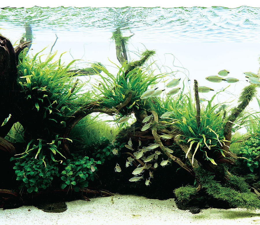 Tropical Fish Hobbyist Jan Feb 2018 Hardscape In The