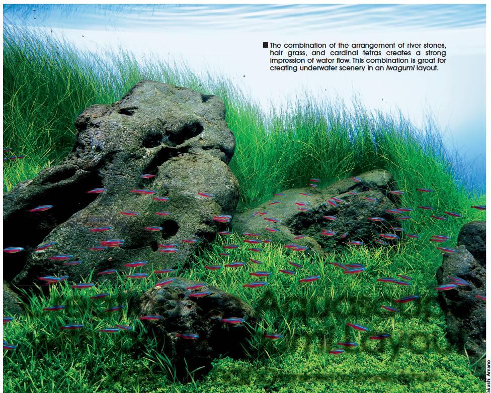 Tropical Fish Hobbyist January 2014 Creating An Aquascape With An Iwagumi Layout