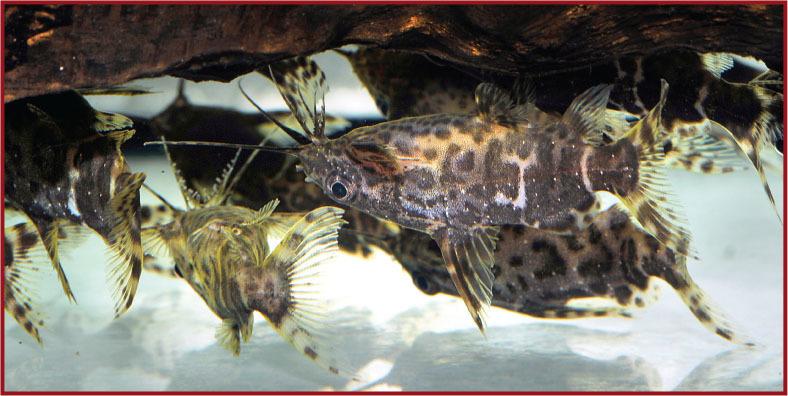 Tropical Fish Hobbyist - Mar/Apr 2018 - bottom of the tank