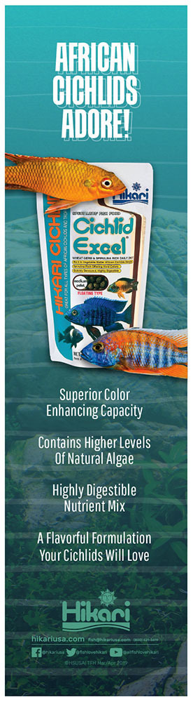 Tropical Fish Hobbyist Mar Apr 2019 Cichlid World