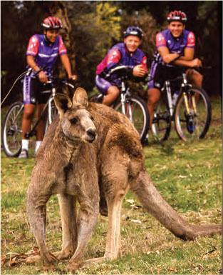 mongoose riders kim bozart