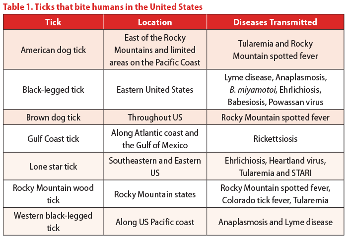 a table ticks that bite humans in the united states
