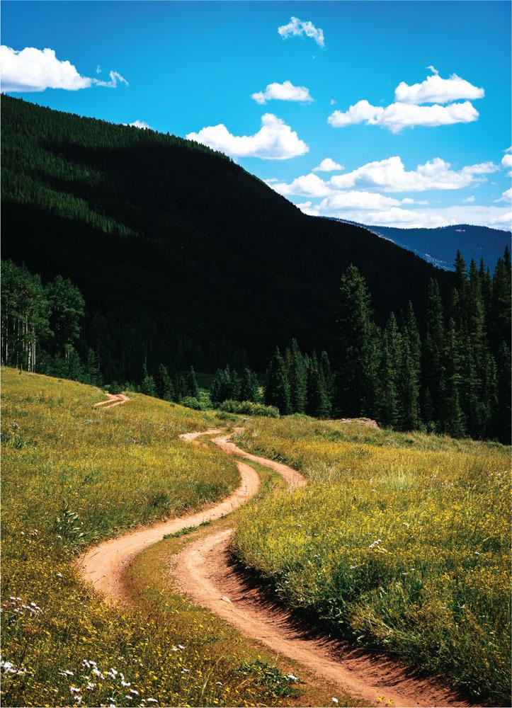 mountain bikes road