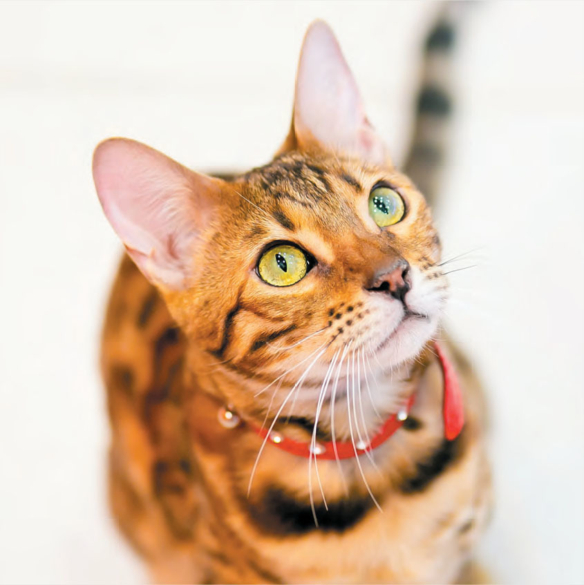 Pet Product News SuperZoo Show Program 2019 List Of
