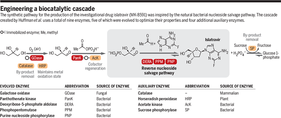 engineering a biocatalytic cascade