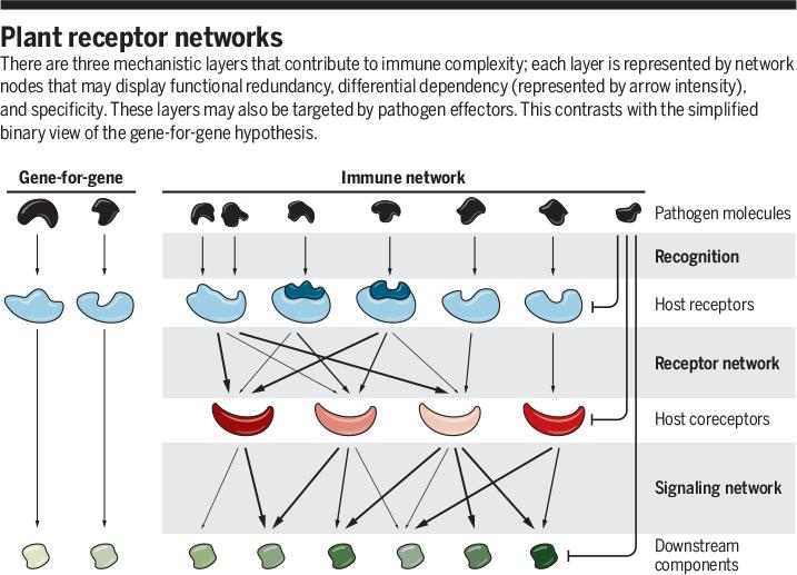 Science Magazine - June 22, 2018 - Receptor networks