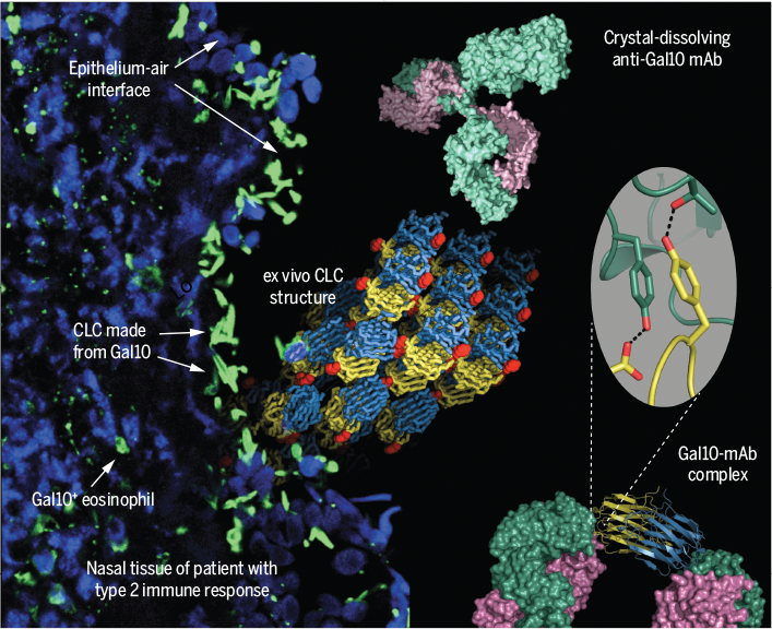 Science Magazine - May 24, 2019 - Protein crystallization