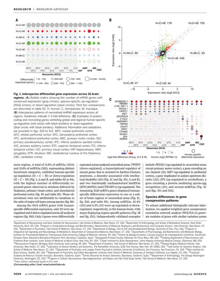 Science Magazine - November 24, 2017 - Page 1028
