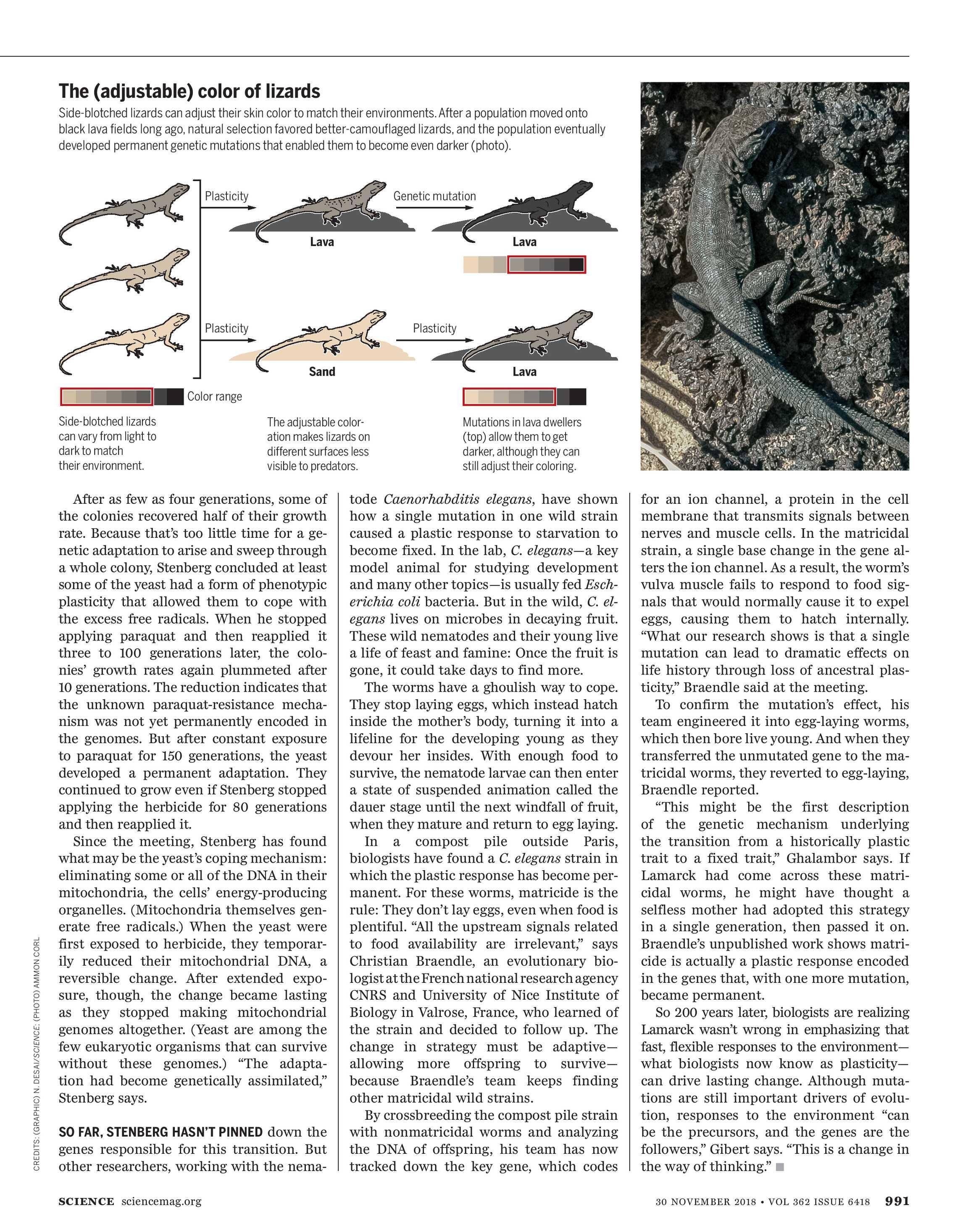 Science Magazine - November 30, 2018 - page 992