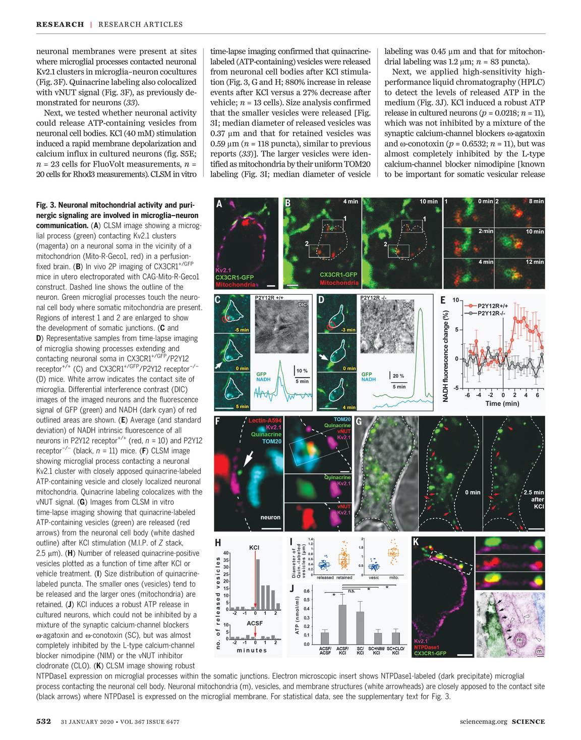 Science Magazine January 31 2020 Page 533