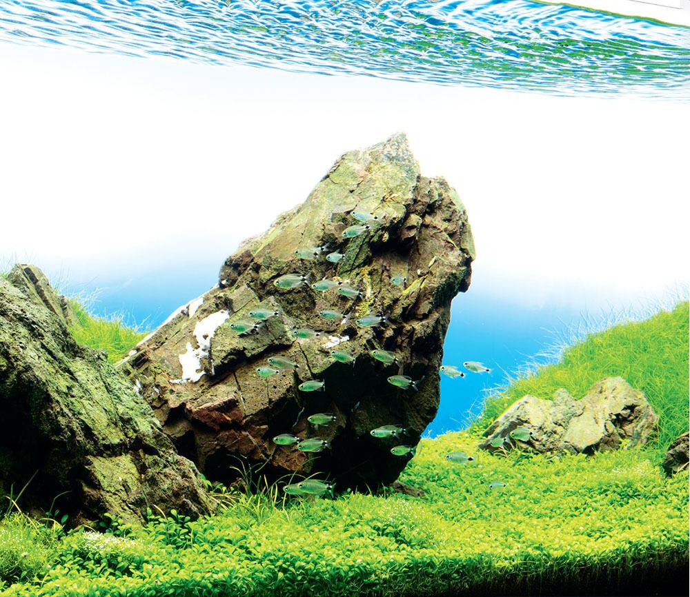 Tropical Fish Hobbyist Nov Dec 2018 Nature Aquarium Basics A Manten Stone Iwagumi Layout