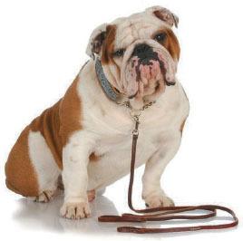 value of tia watchdog