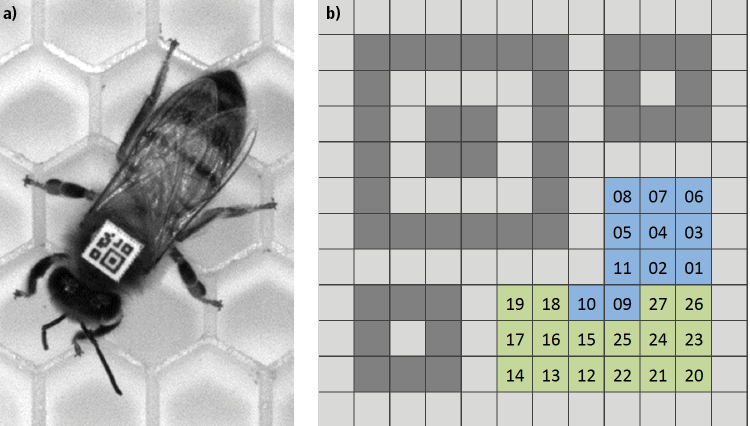 3beb42b63 Figure 1: To identify bee interaction, a custom 2D matrix barcode, known as  a bCode was developed using custom software based on Zxing and attached to  each ...